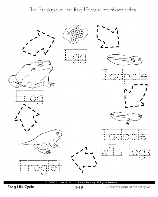 Printables Sample Space Worksheet sample space worksheet abitlikethis 1st grade science stages in the life cycle